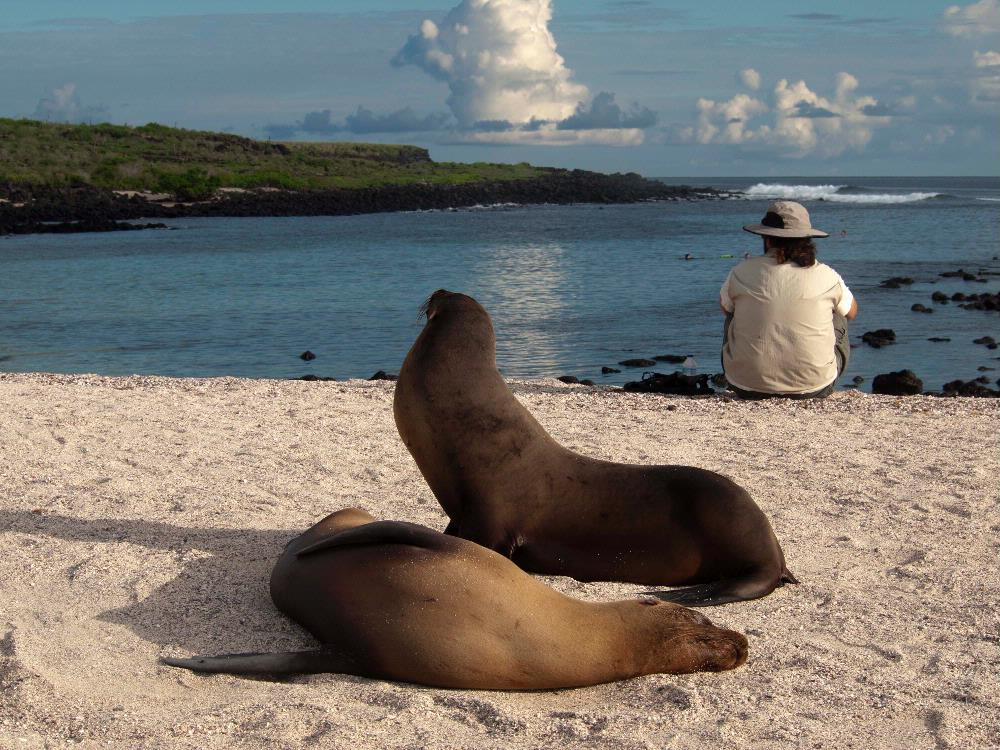 2 Sea Lions and Guy in Galapag